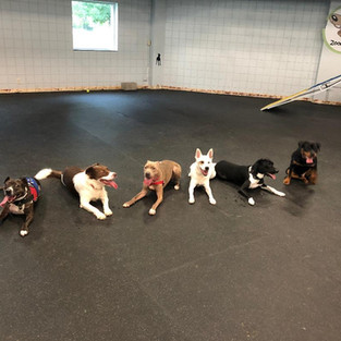Dogs lined up at Zoomy Dogs.jpg