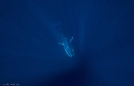 Baleines d'Omura, Nosy Be, Madagascar, M