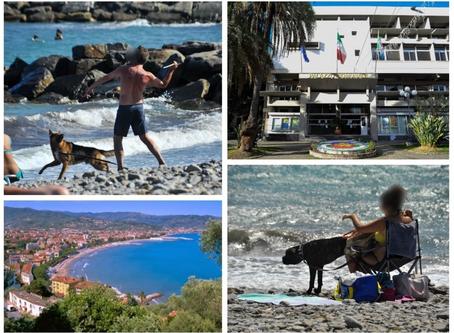 """Diano Marina: cani in spiaggia, via libera del Comune. """"Al mattino presto e alla sera tardi"""""""