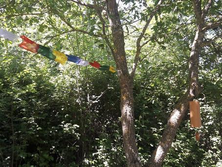Yoga en plein air - Sylvogoga
