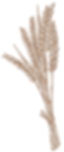 blé.PNG