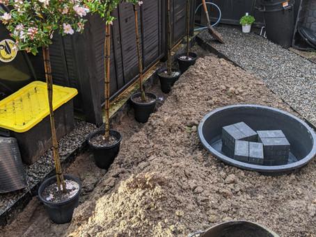 A Garden Designers Home Garden: Part 2