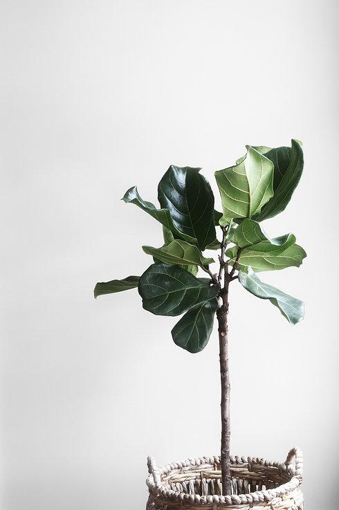growth-indoors-leaves-38896.jpg