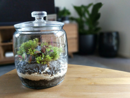 Terrariums - The captured garden craze.