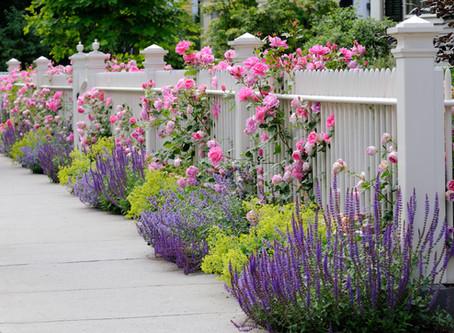 Garden Design Tips - Choosing Colours