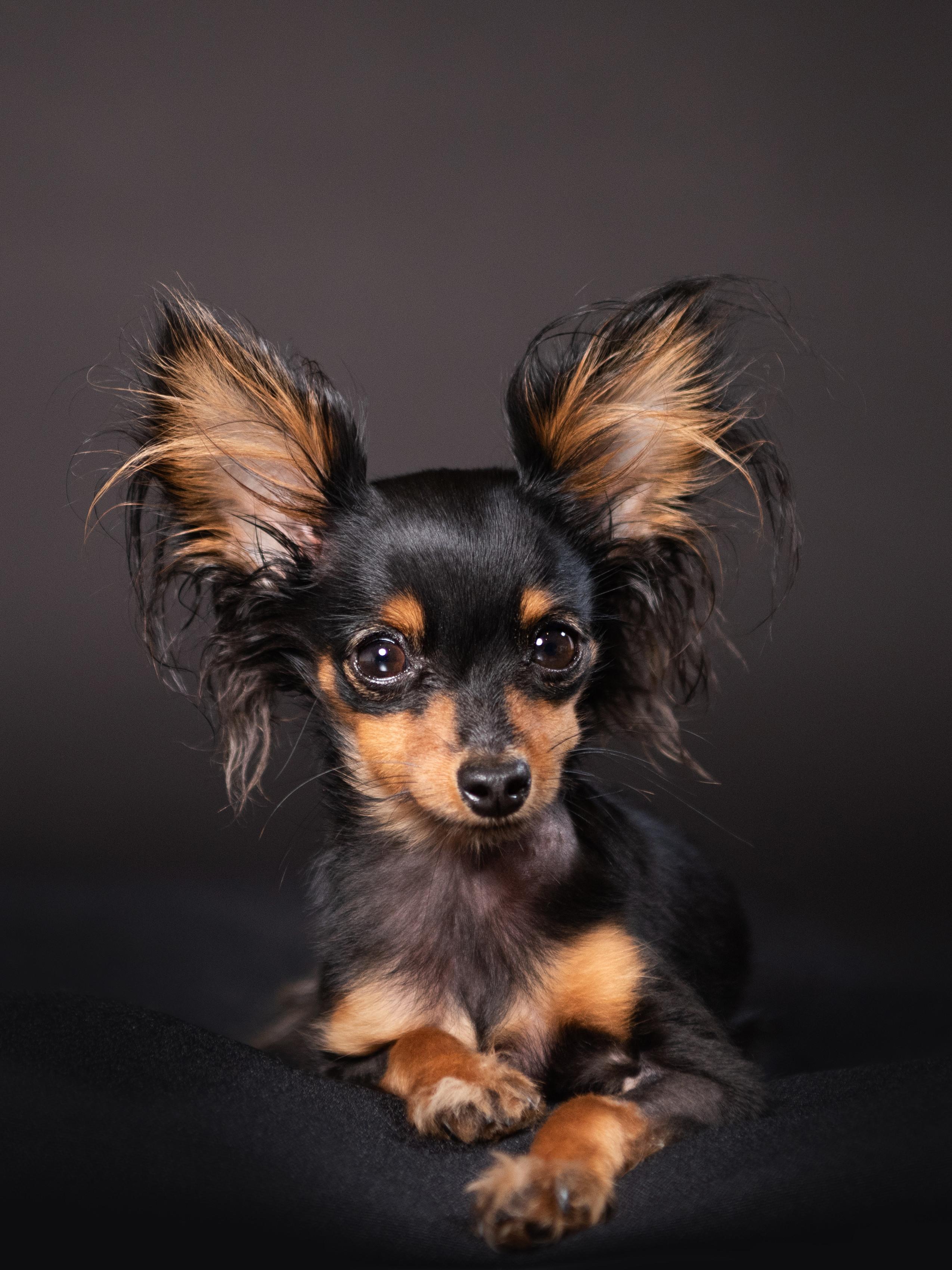 All Inclusive Pet Portrait