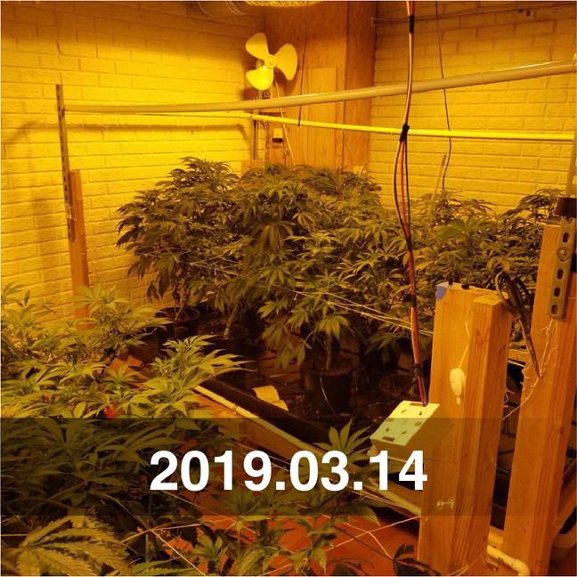Pozeen Cannabis Field Testing
