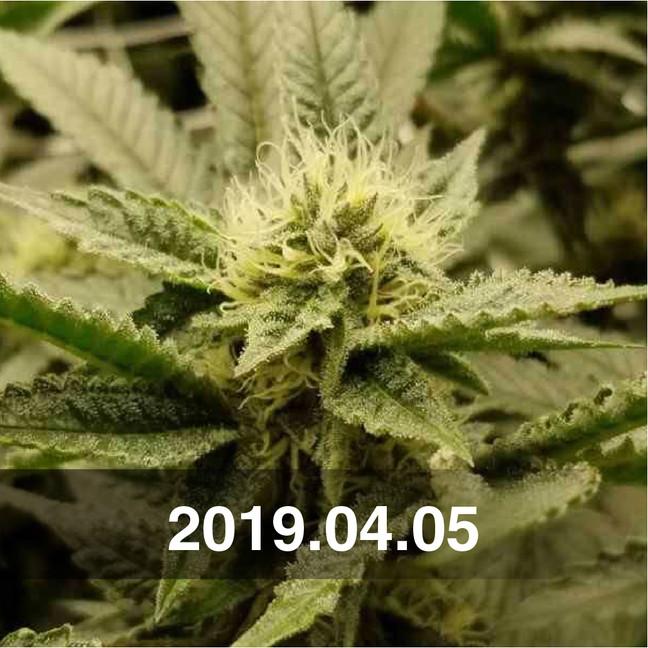 Pozeen_Cannabis_Field_Testing_0405.jpg