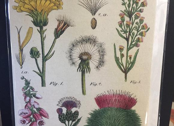Wildflowers blank card