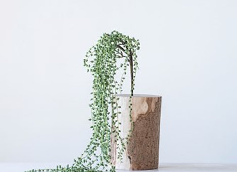 String of Pearls (Faux) Succulent Pick