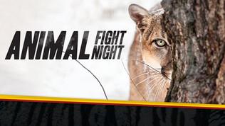 Animal Fight Night 3
