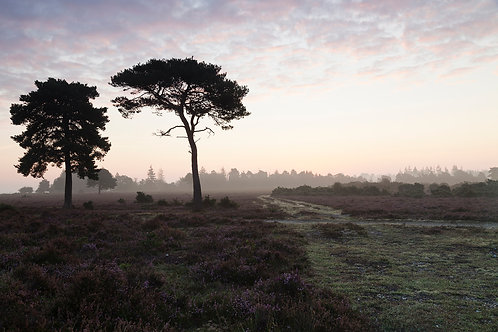 Rockford Common Crossroads- New Forest