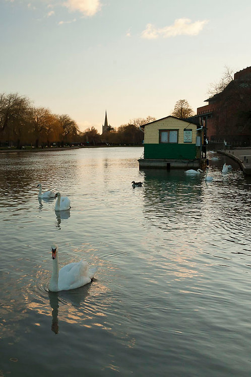 The Waterfowl- Stratford-upon-Avon