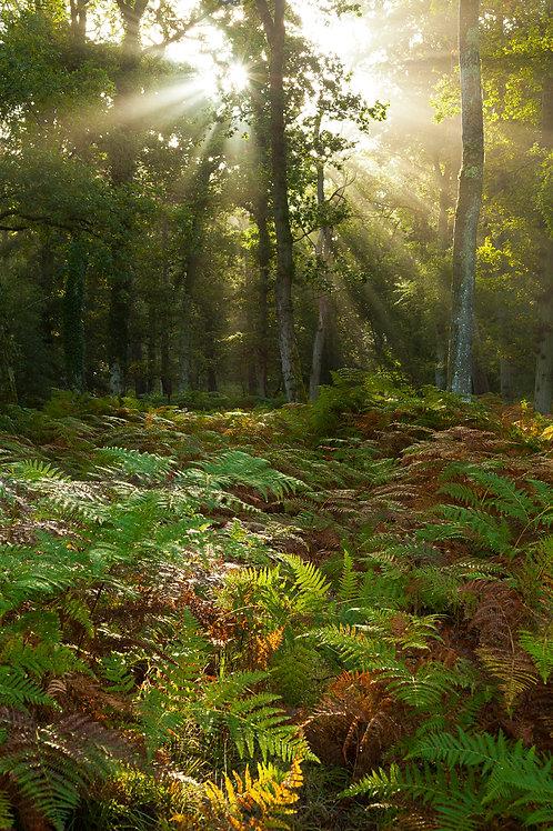 Morning Light- Frame Heath