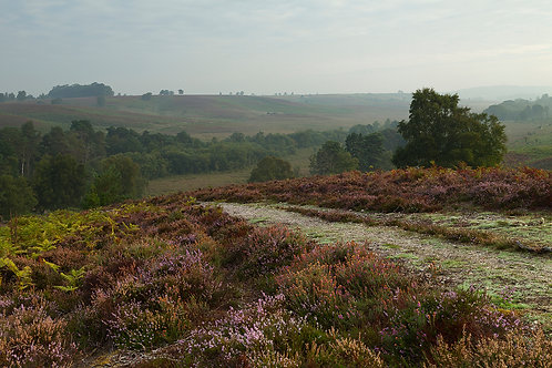 Rockford Common Footpath- New Forest