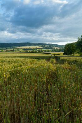 Winchcombe Corn.jpg