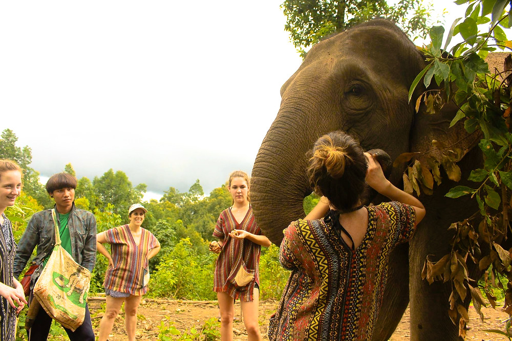 Me admiring these beautiful elephants - they've always been my favorite animal!