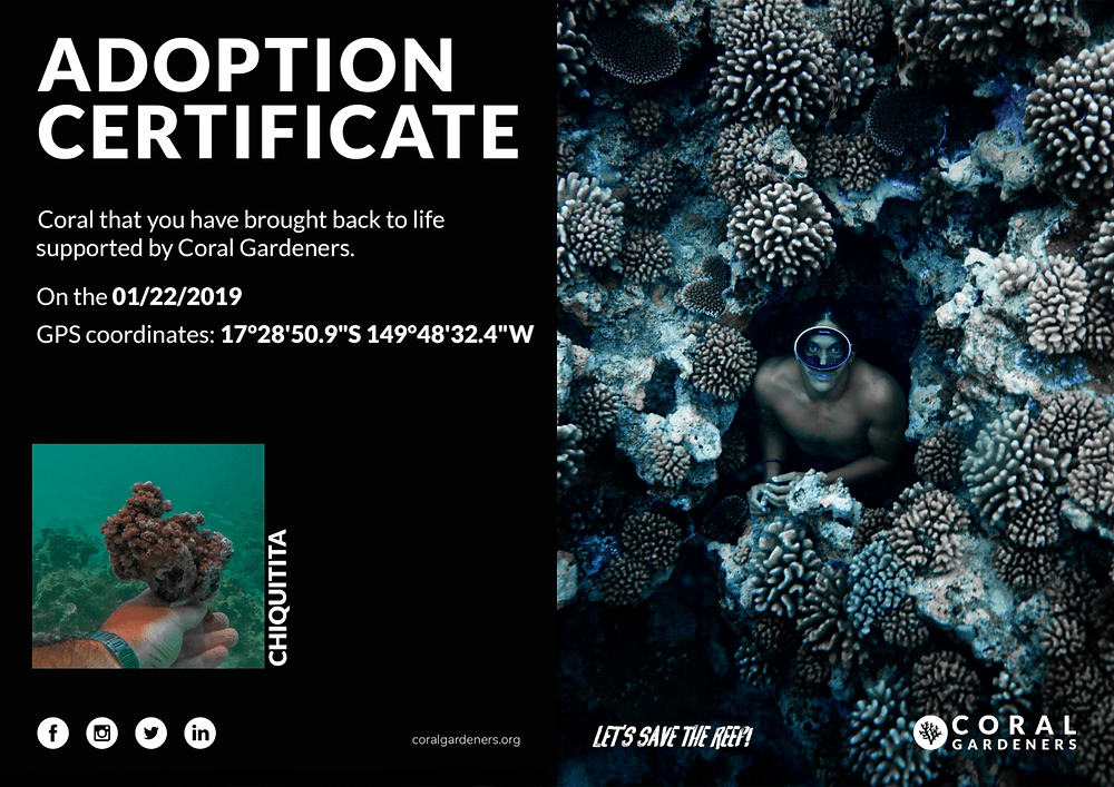 Coral adoption certificate from Coral Gardeners with a photo and GPS coordinates