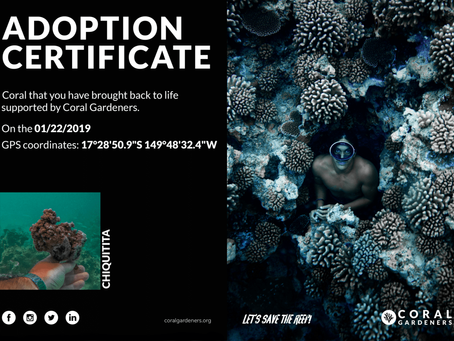 Coral Gardeners: Adopt Your Own Coral