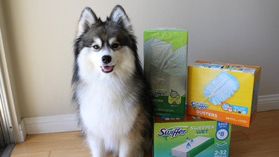 The Dog Days of Summer w/ Sam's Club and Swiffer!