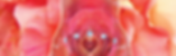 pink moon banner.png