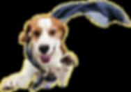 Sdog2.png