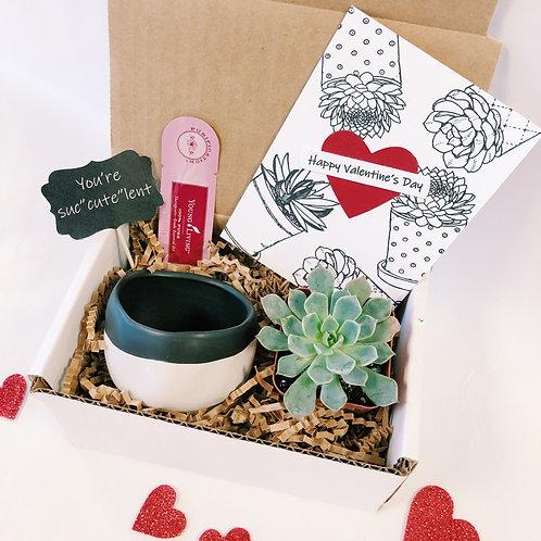 Mini-tine   Mini DIY Succulent Diffuser Gift Box