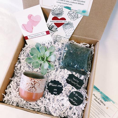 Pot of Love   DIY Succulent Diffuser Gift Box
