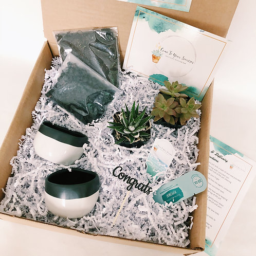 Rooting For You | DIY Succulent Diffuser Gift Box