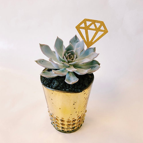 Diamond Rising | DIY Succulent Diffuser Gift Box