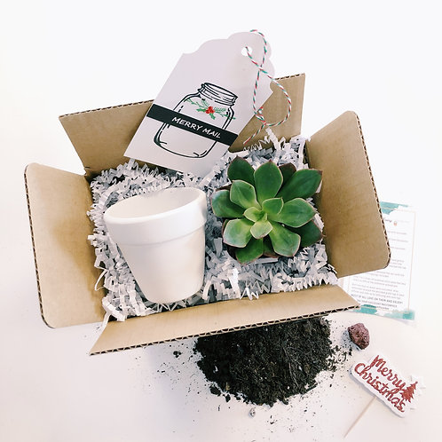 Merry Mail | Mini DIY Succulent Diffuser Gift Box