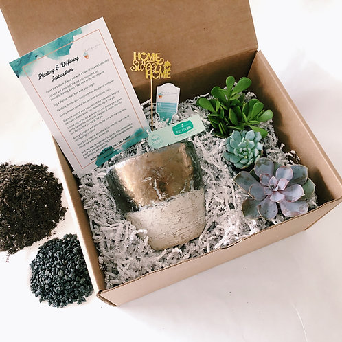 Summer Collection | DIY Succulent Diffuser Arrangement Kits
