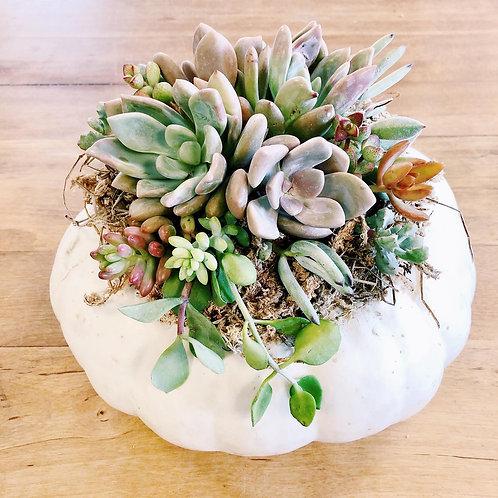 Succulent Pumpkin Diffuser (PRE ORDER)