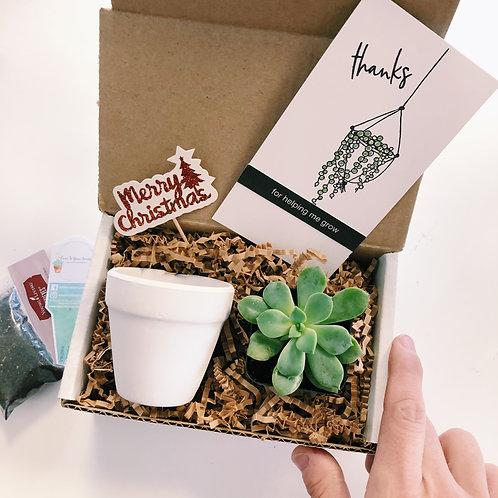 Teacher Merry Mail | Mini DIY Succulent Diffuser Gift Box