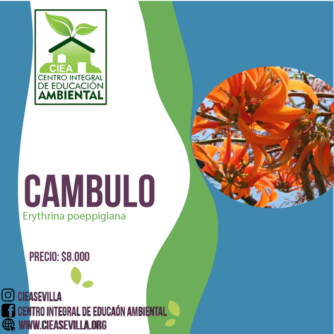 CAMBULO