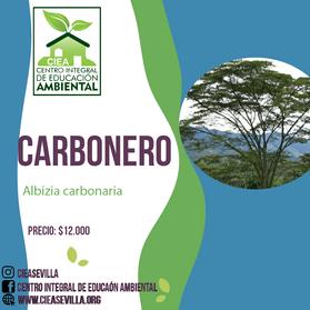 CARBONERO