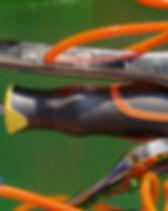 tools orange.jpg