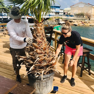 New palmtrees