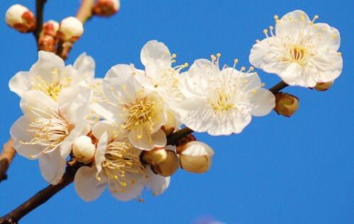 奈良の生け花教室 冬至の話