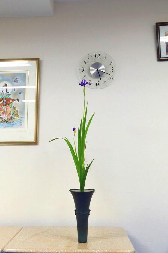 奈良のいけばな教室レポートと3分でわかる花 【瑞浪 奈良 第10回いけばなを楽しむ会 菖蒲(しょうぶ)】