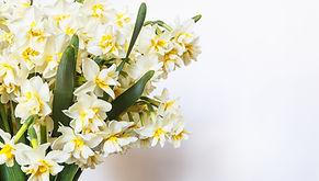 Gelbe und weiße Blumen