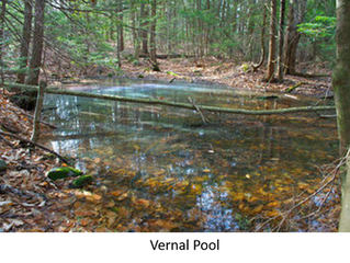 ACTs Nature Corner: Spring Peepers, Frogs & Salamanders