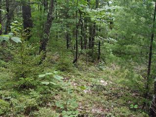 ACT's Nature Corner: Identifying Evergreens