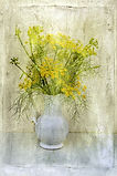 FENNEL%20FLOWER%206012496894_c59119b321_