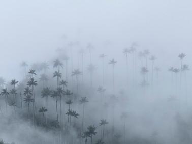 Vallée de la Cocora Colombie