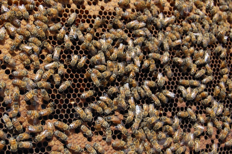 Alanna_Spence_-_queen_bee_(by)