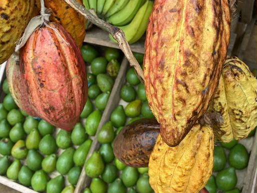 Who introduced cacao to Sri Lanka?