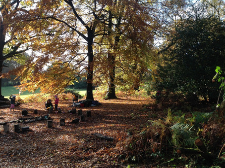 Forest School this autumn