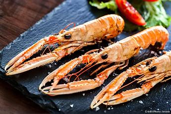 langoustine-crevette-crustace_istock.jpg.webp