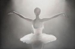 Withe Swan, 48 x 42 cm